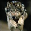 Аватар для VOX666