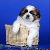 Аватар для vr-gbk